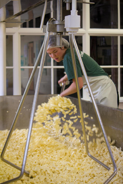 cheddaring at Shelburne Farms