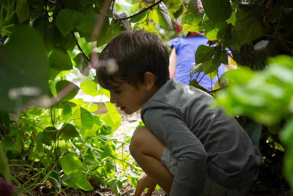 Shelburne Farms Harvest Festival