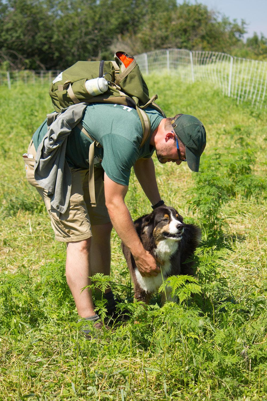 sheepherding fieldtrip