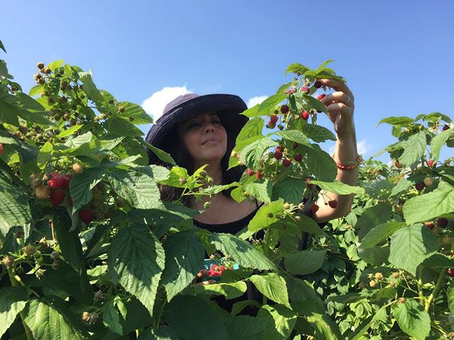 Nothing like picking your own raspberries! Mad respect for all of our farm workers and the pricking, the heat and the body aches they have to endure to make it easy for us to get the ingredients we need without thinking twice about  where it came from or who picked it for us. 🍎🍑🍓🌽🍅 My little family and I went to the beautiful @silvermansfarm and picked our own raspberries, peaches and apples in 92 degree weather. 😳🤦🏻♀️Needless to say, we were the only ones there. 🤣 but Brown people everywhere do this everyday. It was a delicious and truly nourishing experience for our 6 year old and for us. We are pooped! Peach cobbler and fresh apple juice are in our imminent future. And as soon  as I get a second wind, a scratch raspberry margarita is just around the corner! 🤣🤗😋 I highly recommend you take your babies to #pickyourown produce at a local farm and show them the value of labor, the beauty of nature (raspberry fields are magic) and the connectedness to #mamaearth necessary for a healthy human experience. Silverman's Farm is in Connecticut, just a two hour train ride from NYC. Can't wait for their pumpkin patch festivities!  #farmwork  #sustainableliving