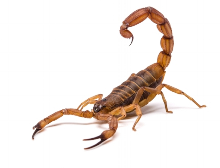 GRPC Scorpion Pic Medium.jpg