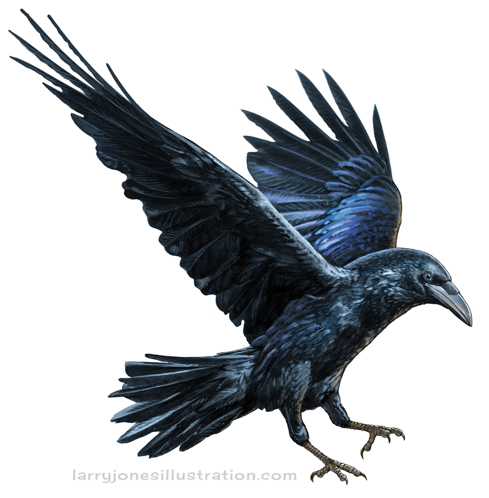 raven-illustration-baltimore.jpg