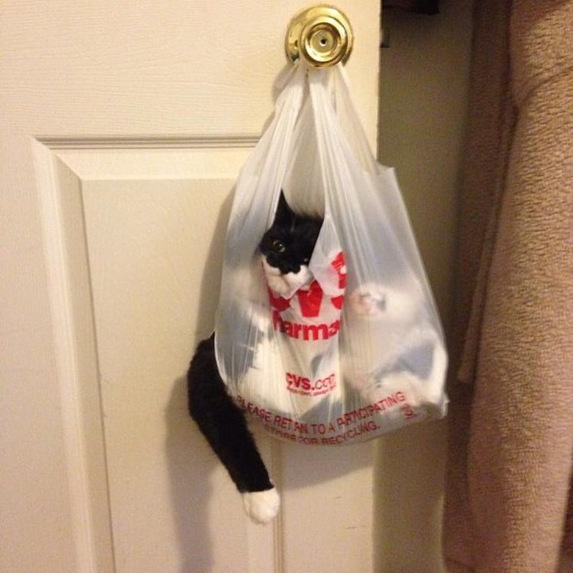 This cat is the chillest #currentmood #plasticbagcat #hangingthere #humpday #nevergiveup #dreamlife