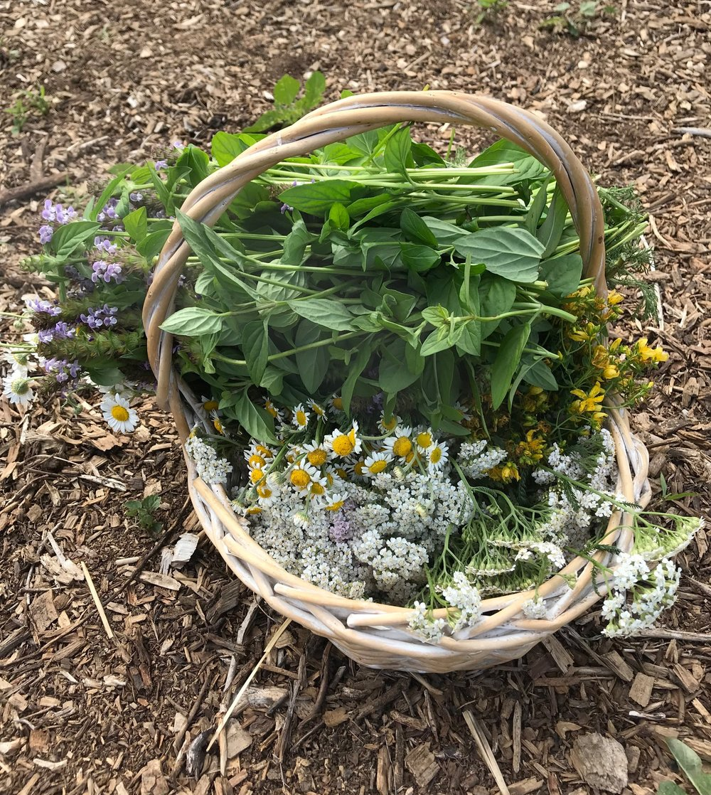 Self-heal, chamomile, yarrow, St. Johnswort