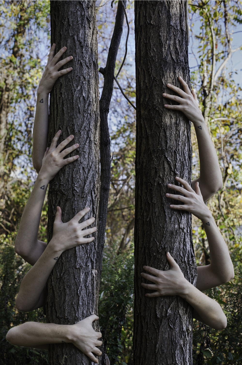 Becoming a tree1.jpg