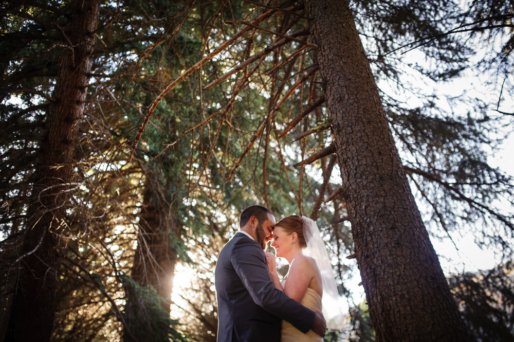 Colorado Bride and Groom embrace in Pine trees near Donovan Pavilion