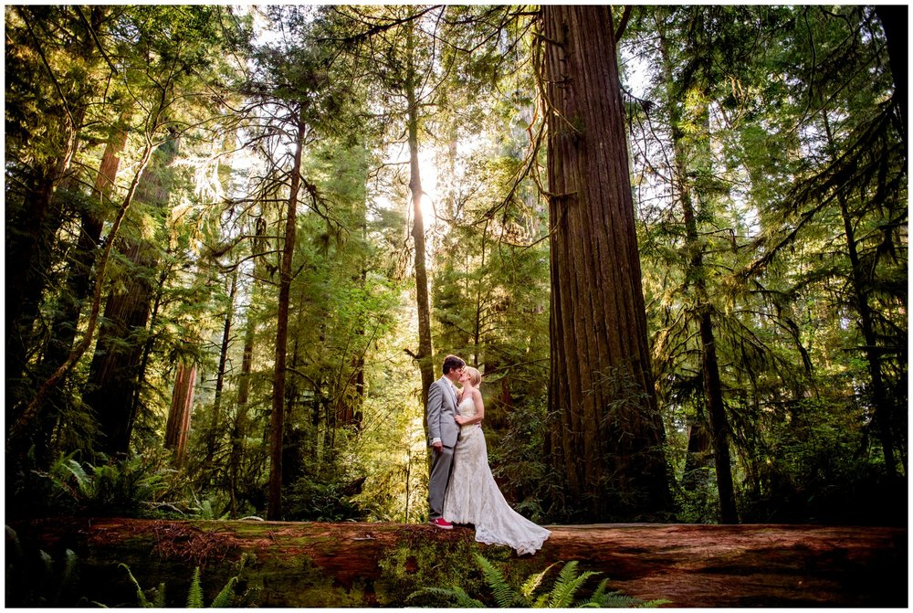 wedding photo on tree branch in Redwood Forest
