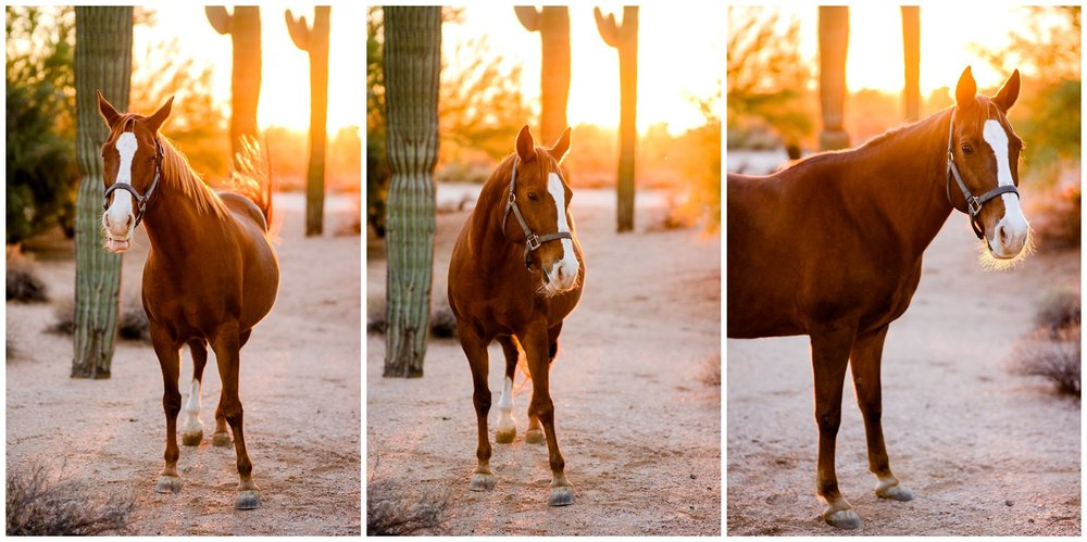 Arizona-desert-commercial-horse-photography-_0035.jpg