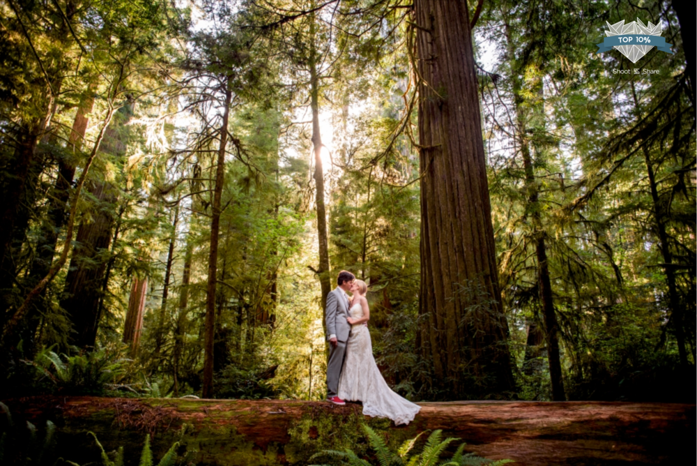 Redwood Forest Wedding - The Wedding Couple Category - 2,286/35,527