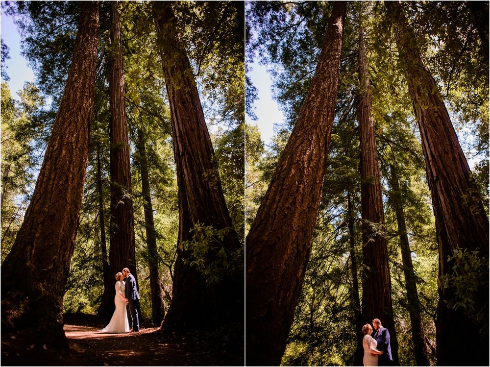 California Redwood Forest portraits