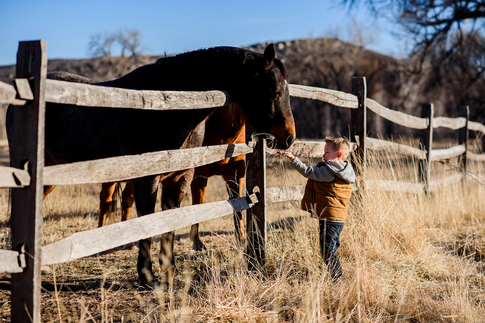 child feeding horse in Fort Collins family photo session