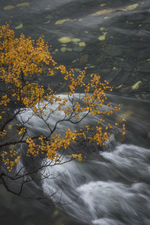 BirchWater-1.jpg