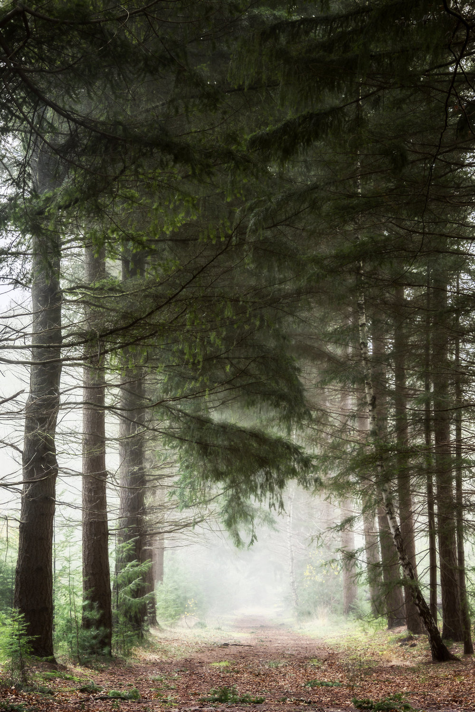 Pine-Portal.jpg