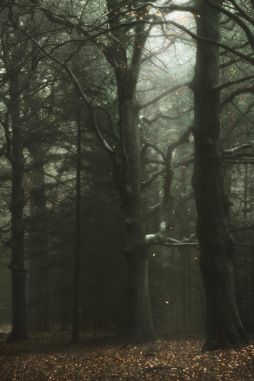 TheLastDreamoftheOldTrees.jpg