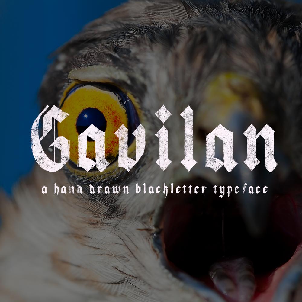gavilan-cover.png