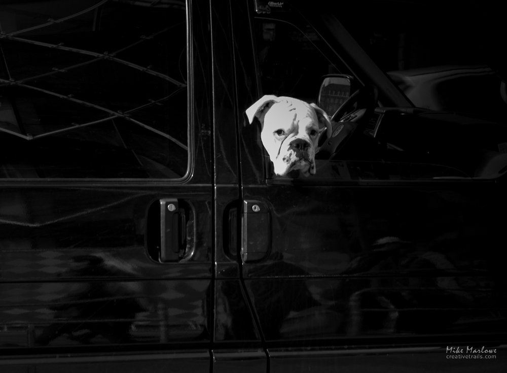 Photo of a dog leaning out of a car window in Copehagen, Denmark. Shot on a Creative Trail photography tour.