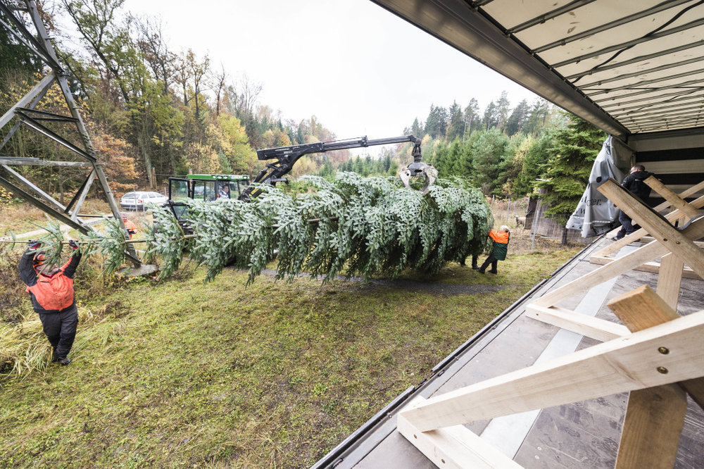 Loading the tree