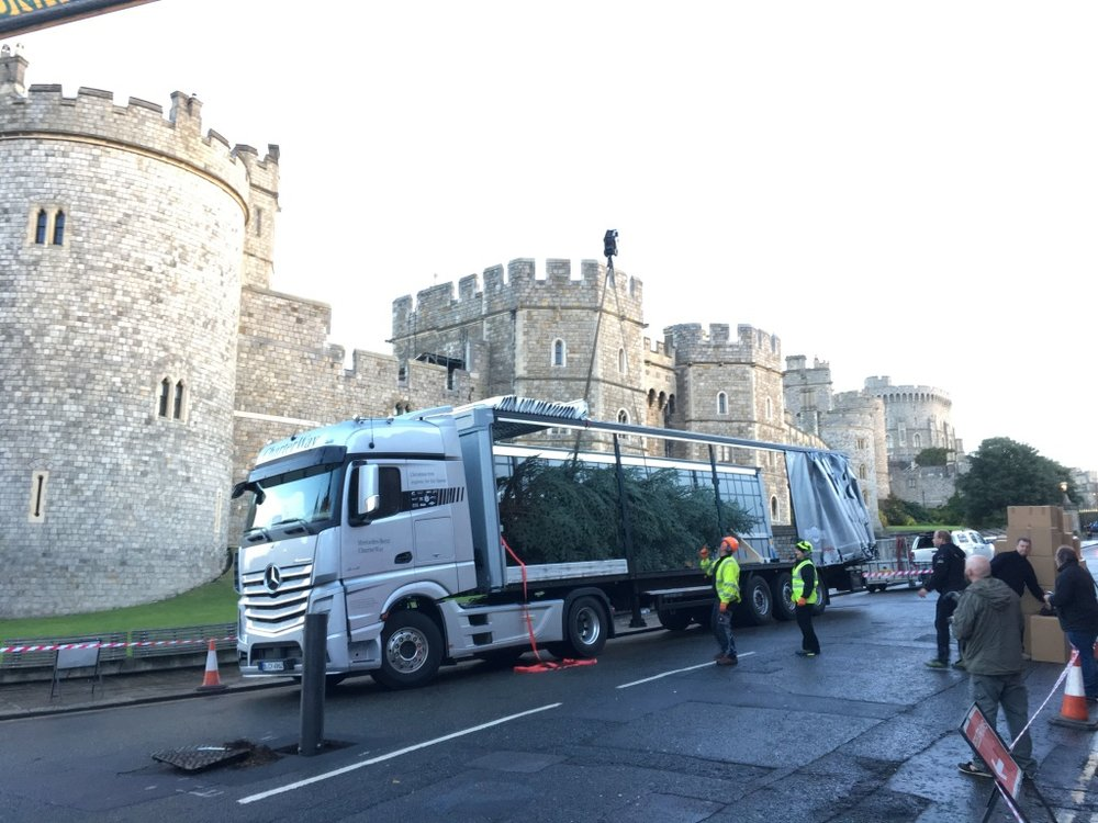 Unloading the tree at Windsor Castle. Is it bad luck to erect a Christmas Tree so early?