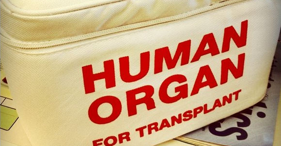 organ_report.jpg