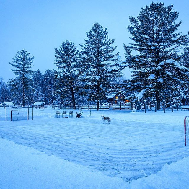 Gunna miss nights like these on the backyard rink with the pup 🐕🌲 @jaxsonthewolfdog