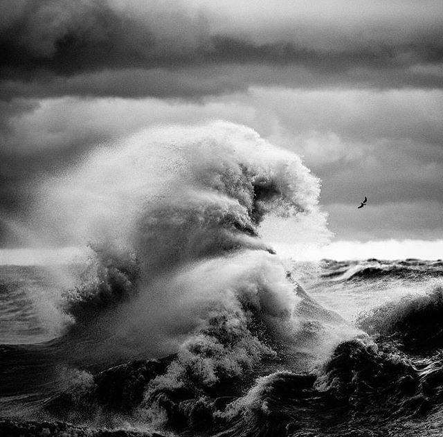 The Great Wave - Kanagawa 🌴
