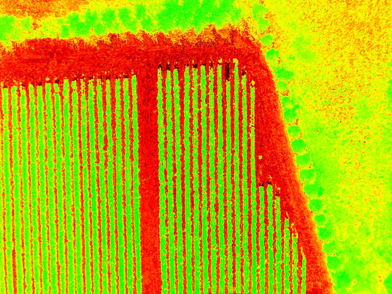 NDVI crop analysis
