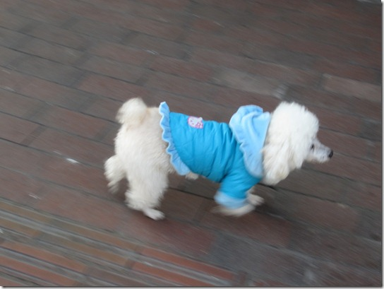 Kirsty_Whyte_China_Blog_Dogs (19)