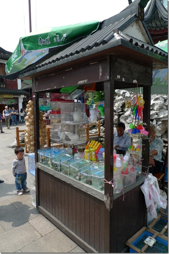 kirsty-whyte-shanghai-qibio (2)