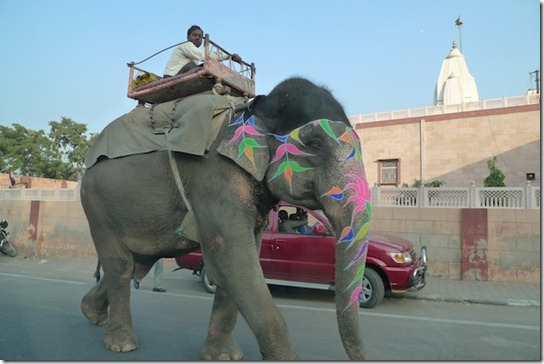 kirsty-whyte-blog-india-china (5)