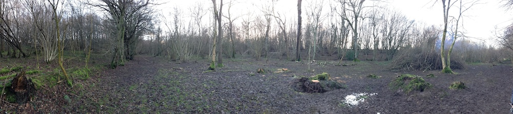 Kirsty Whyte_Blog_Coppicing_Seb Cox_Heals (26)