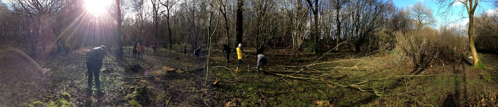 Kirsty Whyte_Blog_Coppicing_Seb Cox_Heals (6)