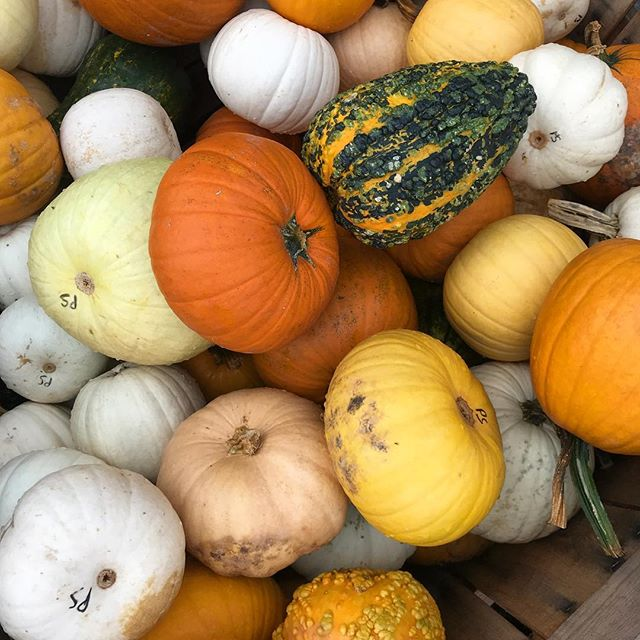 Assorted Pumpkins! The Americans now how to do Halloween! 🎃 @shopterrain