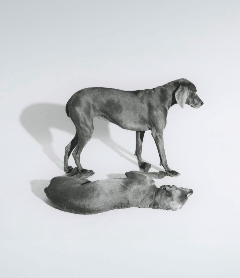 3D Shadow by William Wegman, 1993