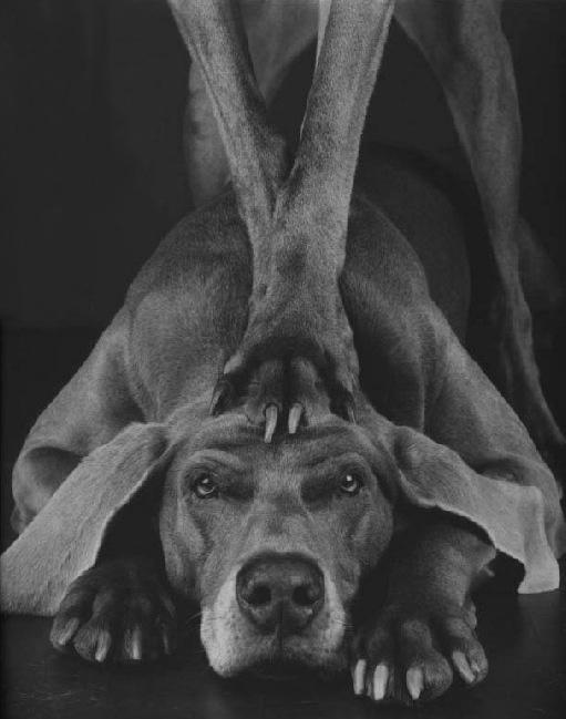 Paw by William Wegman, 1994