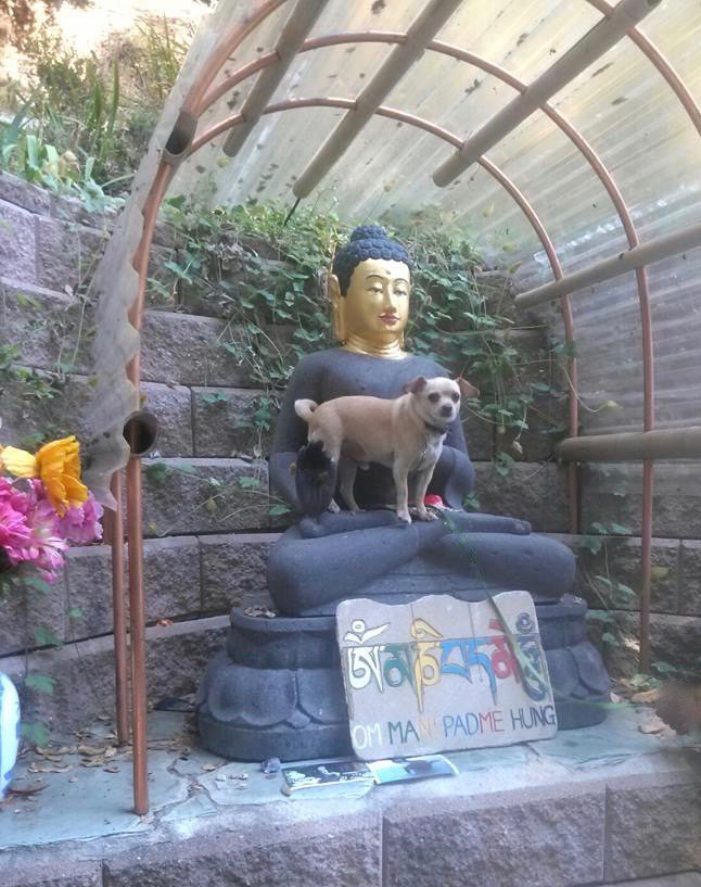 Timmy at Land of Medicine Buddha