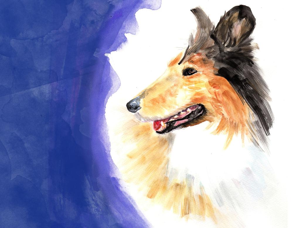 dogportrait.jpg