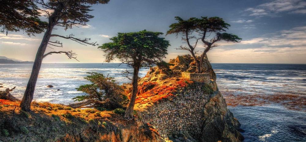 Pebble-Beach-Lone-Cypress-Tree.jpg