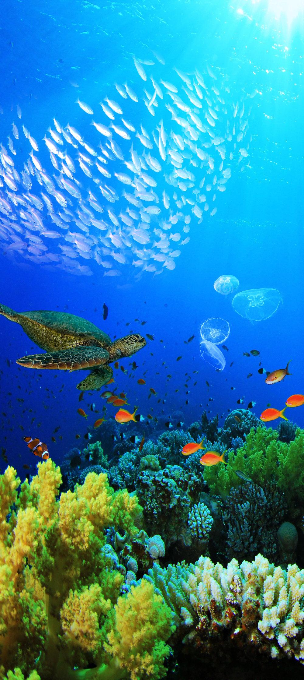 Underwater2 small.jpg