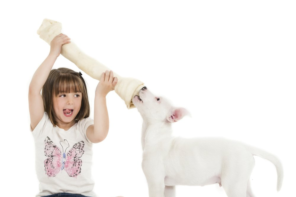 zigzag-photography-leicester-zig-zag-photographers-photo-studio-clarendon-park-queens-road-best-family-portraits-children-pet-dog-bone-animal.jpg