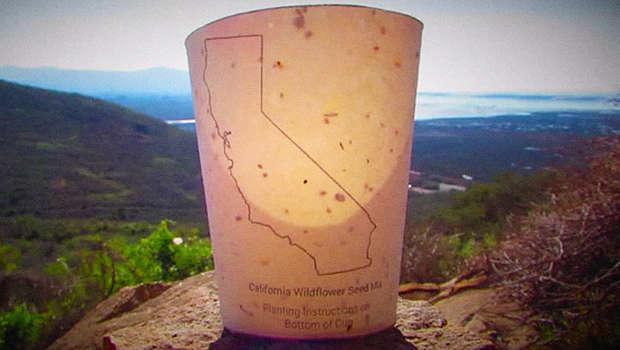 plantable cup.jpg