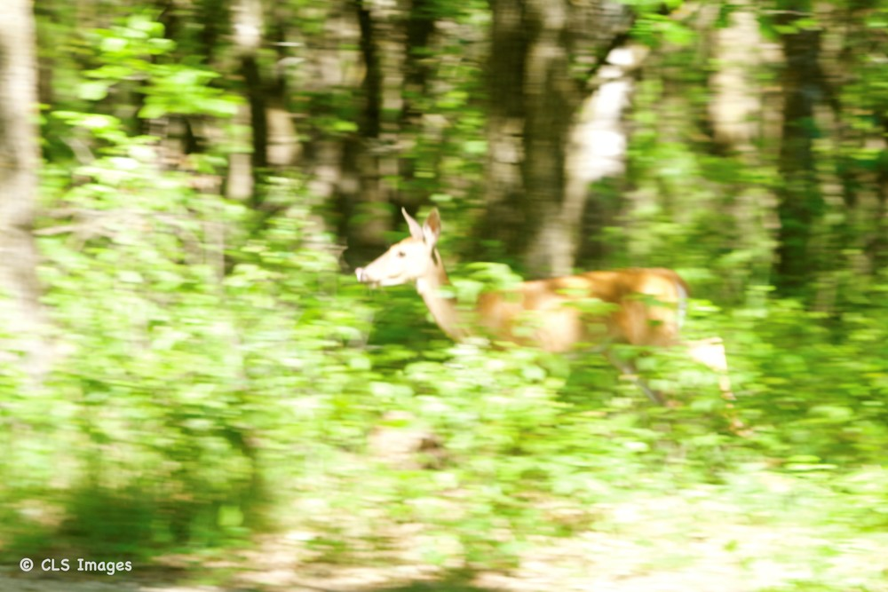 We came across three deer running through the forest!