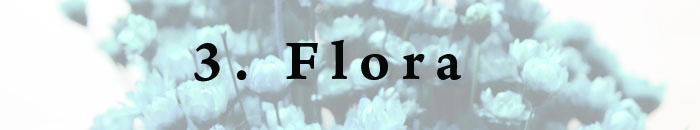 3. Flora