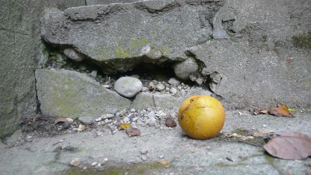 Fallen Gravenstein, Capitol Hill