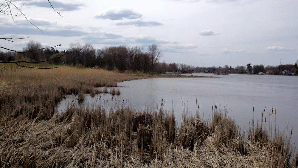 Oneida River shoreline at the Robinson site.  Photo credit: Kerry Nelson