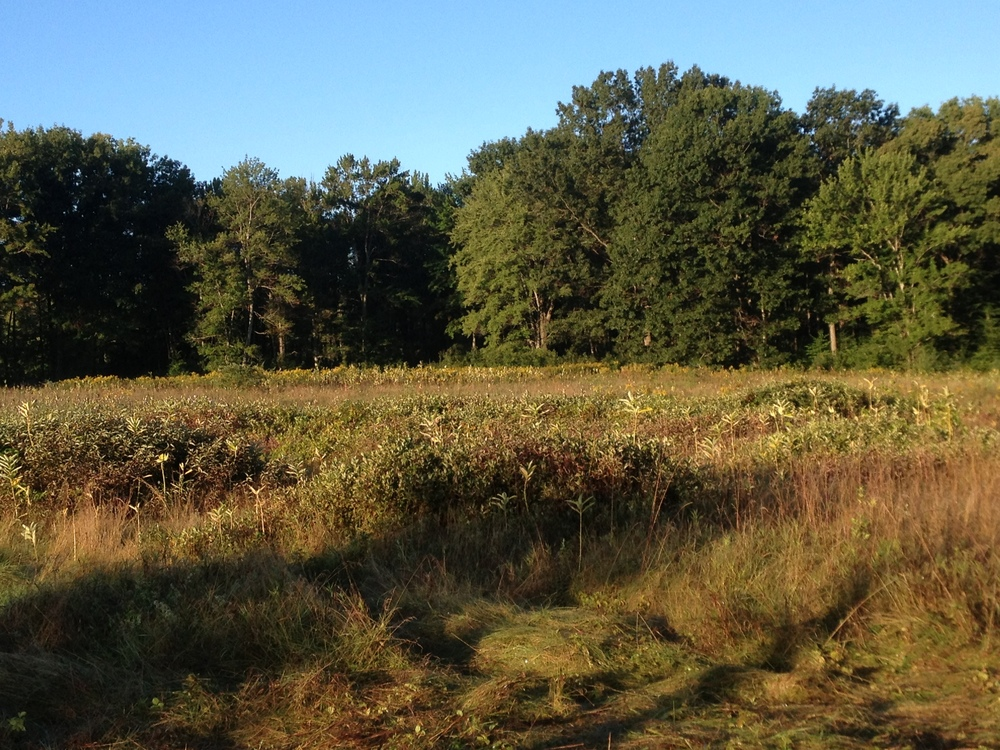 Looking west across the Esmond 2 site on a September morn in 2014.