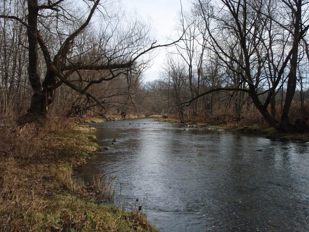 Floodplain forest along Normanskill Creek