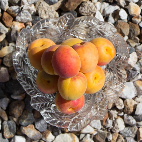 Apricot+Plum=Aprium