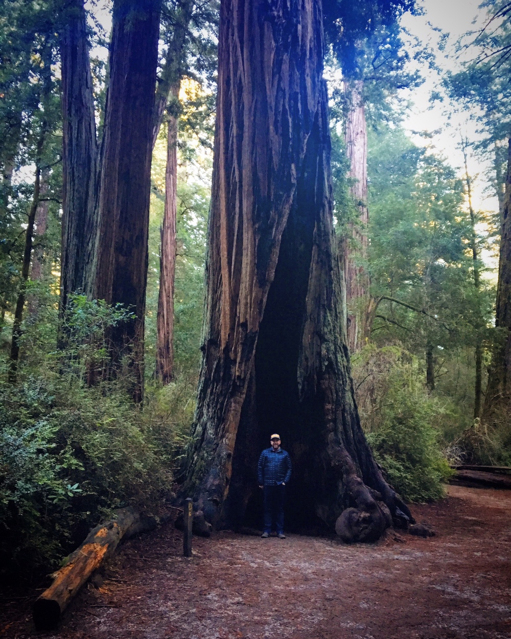 """Chris vs. a redwood. We once read an article where the writer recalled having an """"emotional reaction to a tree"""". It must've been a redwood."""