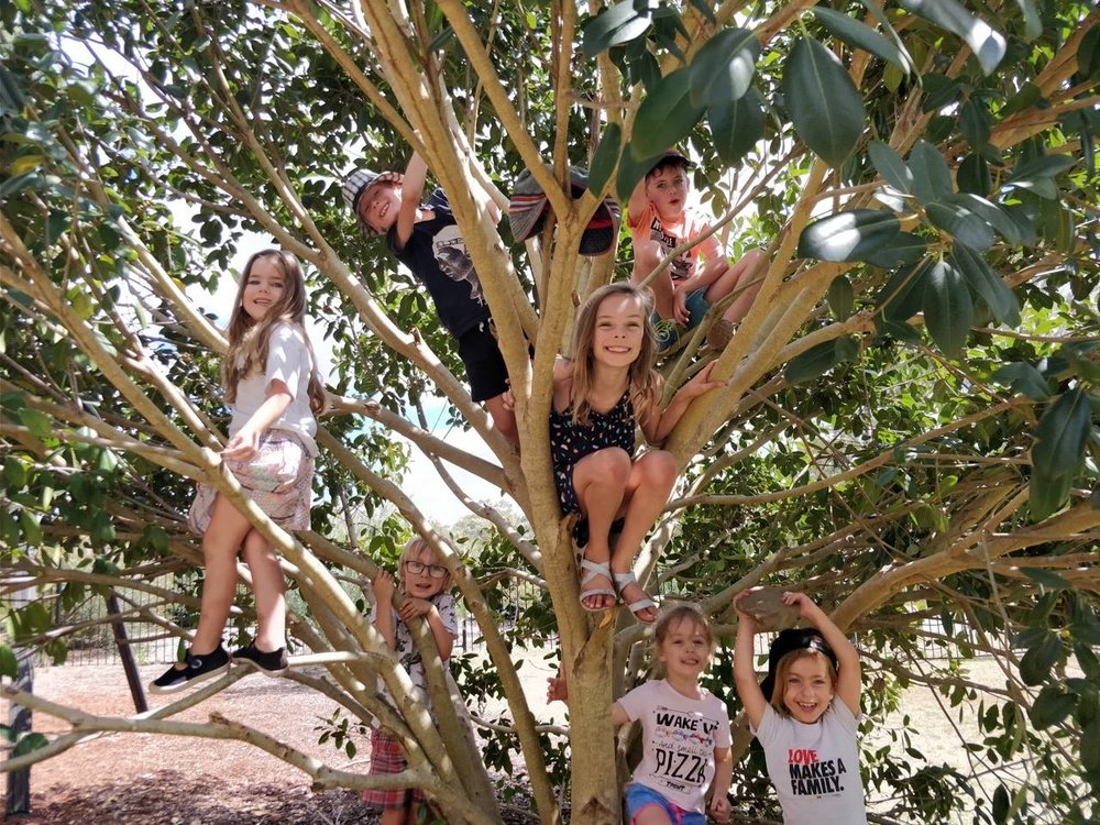 Children from Macarthur Rainbow Families climb the tree in the Mount Annan Botanic Garden playground at our February 2018 meetup