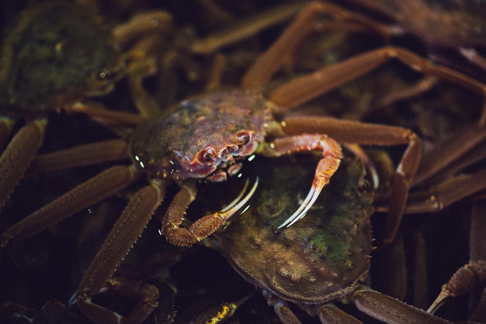 crab at Hokkaido fish market